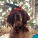 Merry Christmas and Happy Holidays from Kaite