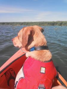 Kota Kayaking