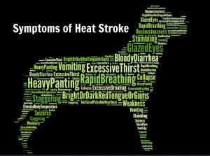 Signs of Heat Stroke 3-1
