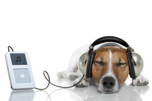dog-listening-to-music-930x619