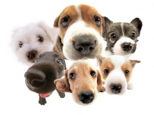 A-lot-of-dogs-dogs-13788806-1024-768