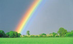 Rainbow - Photo credit: http://www.kickapooanimalrescuealliance.com/The-Rainbow-Bridge.html