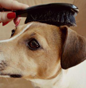 Brushing Dogs HAIR FM4