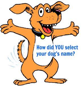 Dog Name HDB - Q