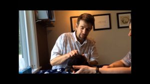 Abbeyrose-Foundation-Case-Study-Chiropractic-for-Puppies